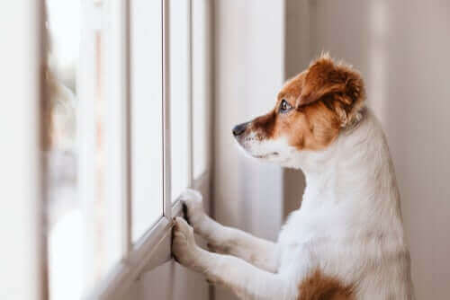 개가 벽을 핥는 이유