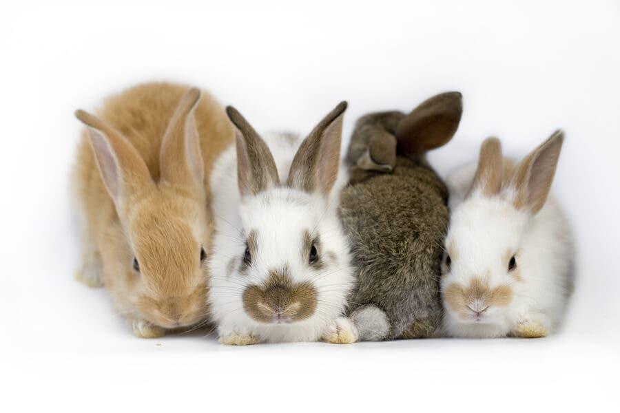 토끼의 전정기관 질환