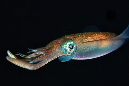오징어의 4