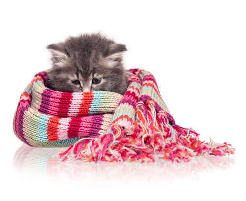 고양이의 체온 저체온증