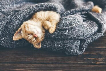 고양이의 체온 변화가 건강에 미치는 영향