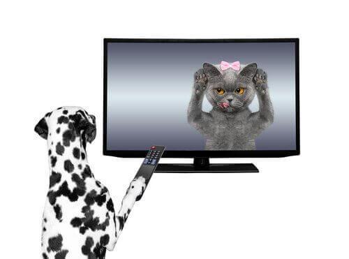 동물이 출연하는 광고의 인기 비결