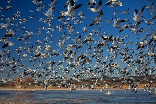 동물 세계에서 가장 놀라운 대규모 이동