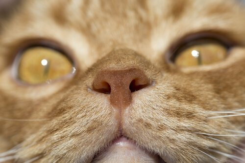 고양이의 놀라운3