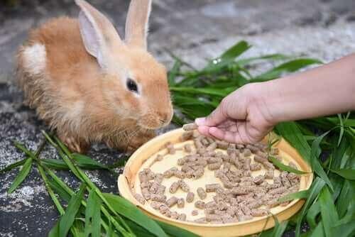 토끼가 설사할 때 해야 할 일