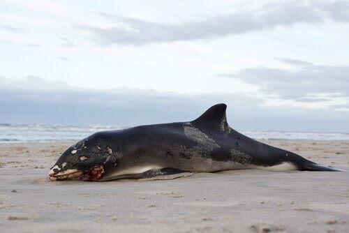 고래 사체가 폭발하는 이유