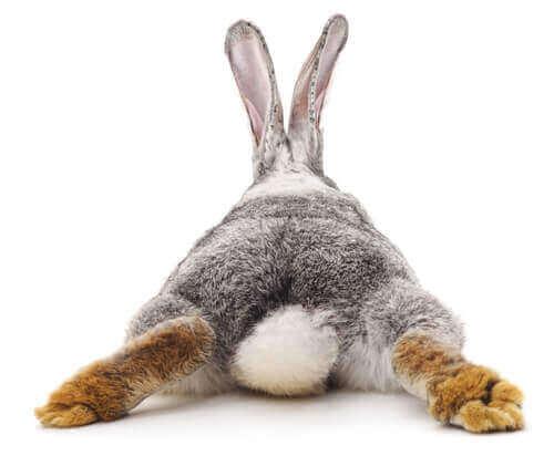 토끼가 설사할 때 대처 방법