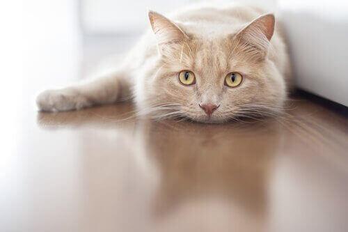 고양이의 놀라운2