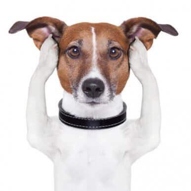 청력이 손상된 개에게 육감이 있을까
