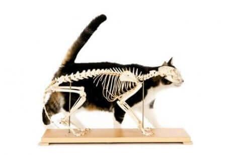 고양이를 위한 카이로프랙틱은2