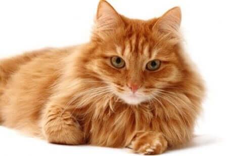 고양이 털갈이에2