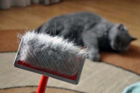 고양이 털갈이에3