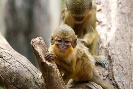 탈라포인 원숭이의2