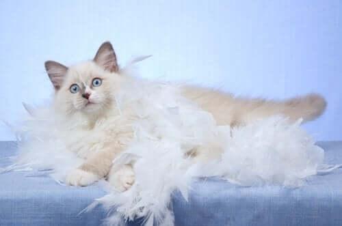 고양이 털갈이 및 관리 방법