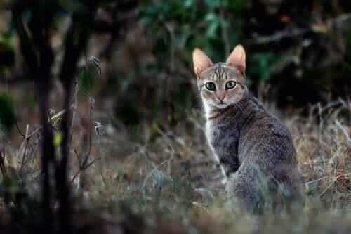 고대 이집트의 고양이는 어떤 모습이었을까
