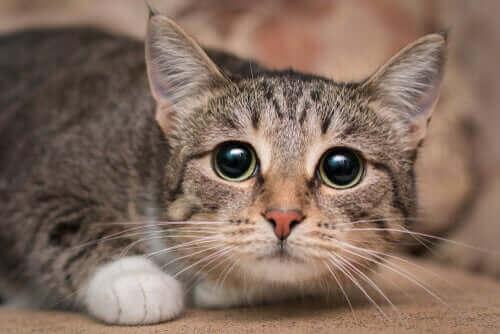 고양이는 여러 성격을 가질 수 있다