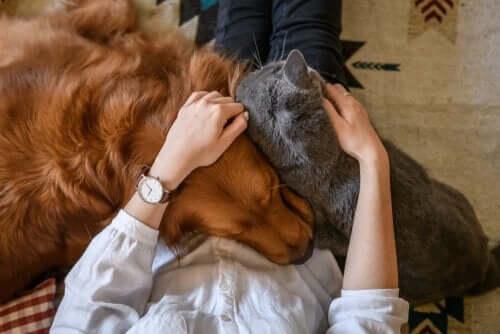 반려동물에게 애정을 표현하는 4가지 방법