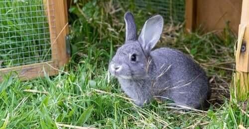 반려토끼를 위한 토끼장 만들기