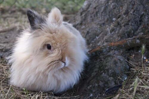 앙고라 드워프 토끼를3