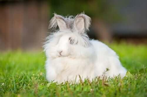 앙고라 드워프 토끼를2