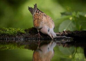 스페인에 서식하는 토종 비둘기 5종