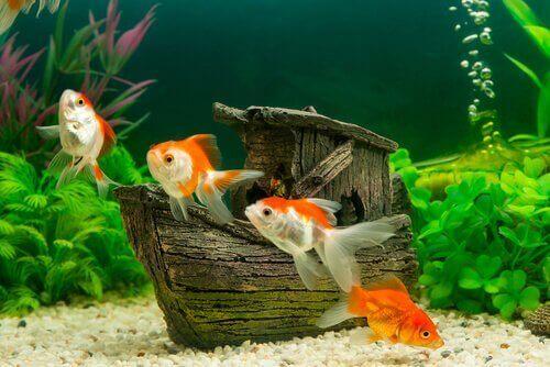 수조에 새로운 물고기를 넣는 5가지 방법