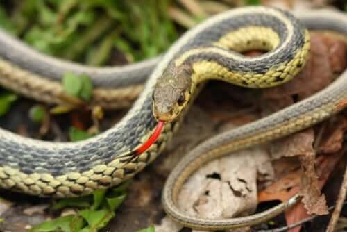 뱀의 보습코 기관은3