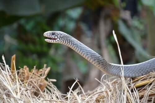 뱀의 보습코 기관은2