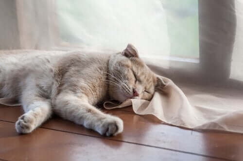 고양이의 코골이를 걱정해야 하는 경우