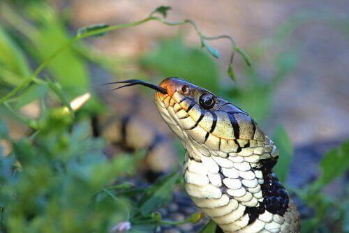 뱀의 보습코 기관은 어떤 기능을 할까