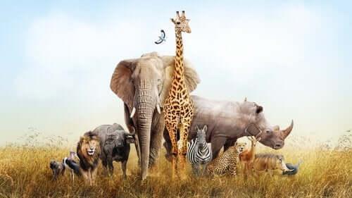동물원에서 동물에게 먹이를 주는 것이 왜 위험할까?