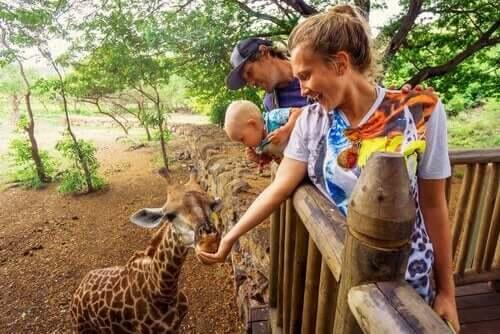 동물원에서 동물에게 먹이를 주는 일
