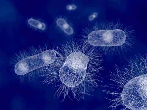 포유류의 장에 서식하는 대장균 및 감염 예방법