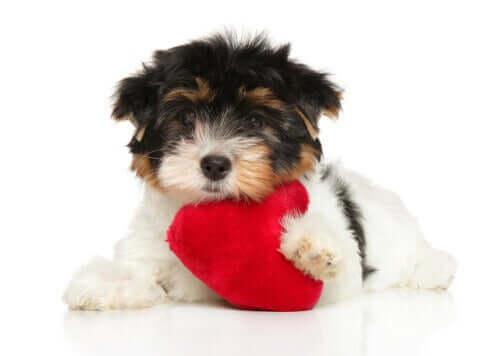 반려견의 심장을 건강하게 하는 6가지 방법