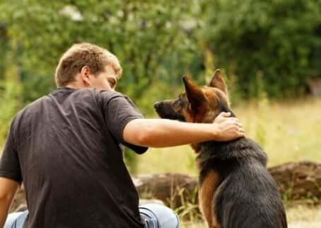 과학자들에 따르면, 개는 속이는 방법을 알고 있다