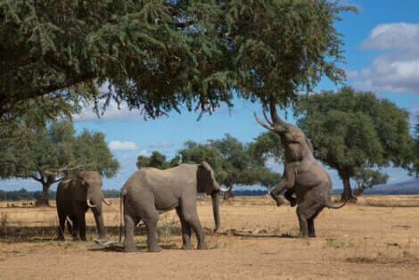 포획 사육하는 코끼리를 위한 특수 시설