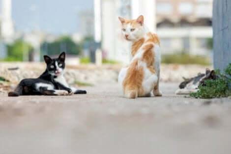국제 고양이의3