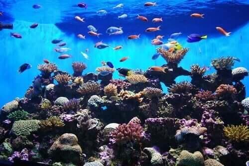 수족관에서 키울 수 있는 화려한 물고기들