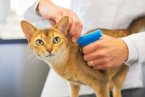 고양이 마이크로칩은 꼭 필요할까