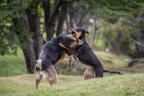 개싸움터에서 230마리의 개를 구출한 스페인 경찰