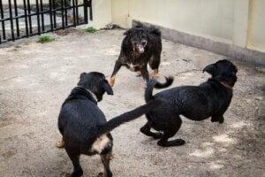 개싸움터에서 230마리의 개를 구조한 스페인 경찰