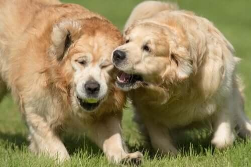 개가 물지 않도록 하는 방법