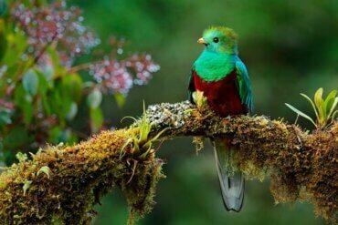 남미의 상징과도 같은 새, 케찰의 특징