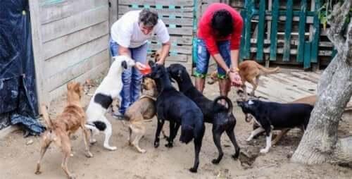 강제 퇴거 명령을 받은 콜롬비아 동물 구조 단체
