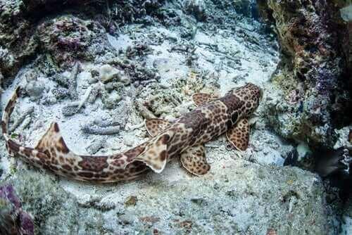 바닷속을 기어 다니는 신기한 '걷는 상어'의 특징