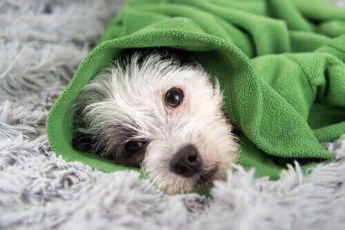 반려견의 감기 예방을 위한 필수 상식