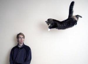 카이로프랙틱에서 고양이를 치료하는 방법