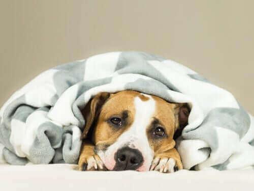 반려견 감기 증상
