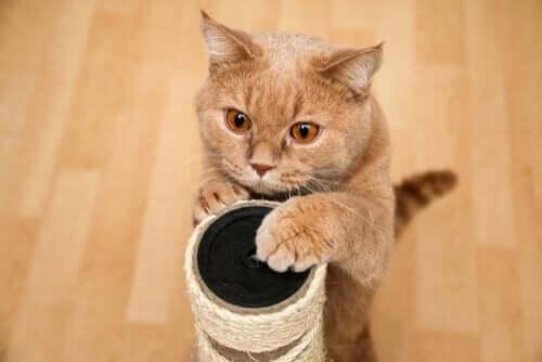 고양이가 멋진 스크래쳐를 거부하는 이유