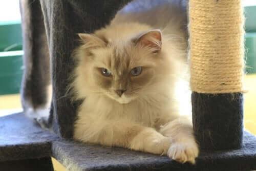 고양이 스크래쳐에 관한 추가적인 팁